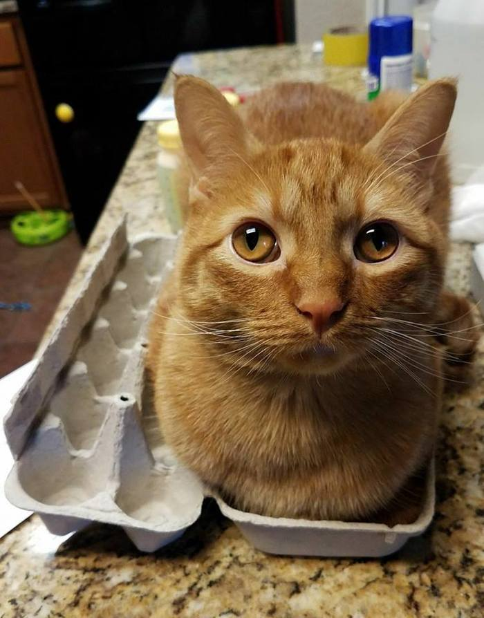 Котику в коробочке всегда хорошо