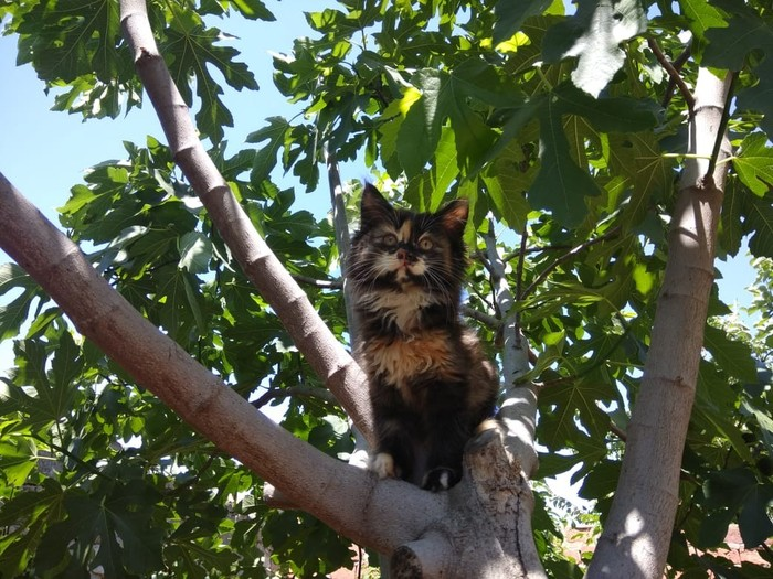 Отдам котят. (Каспийск или Махачкала) В добрые руки, Без рейтинга, Помощь, Коты ищут дом, Каспийск, Махачкала, Длиннопост