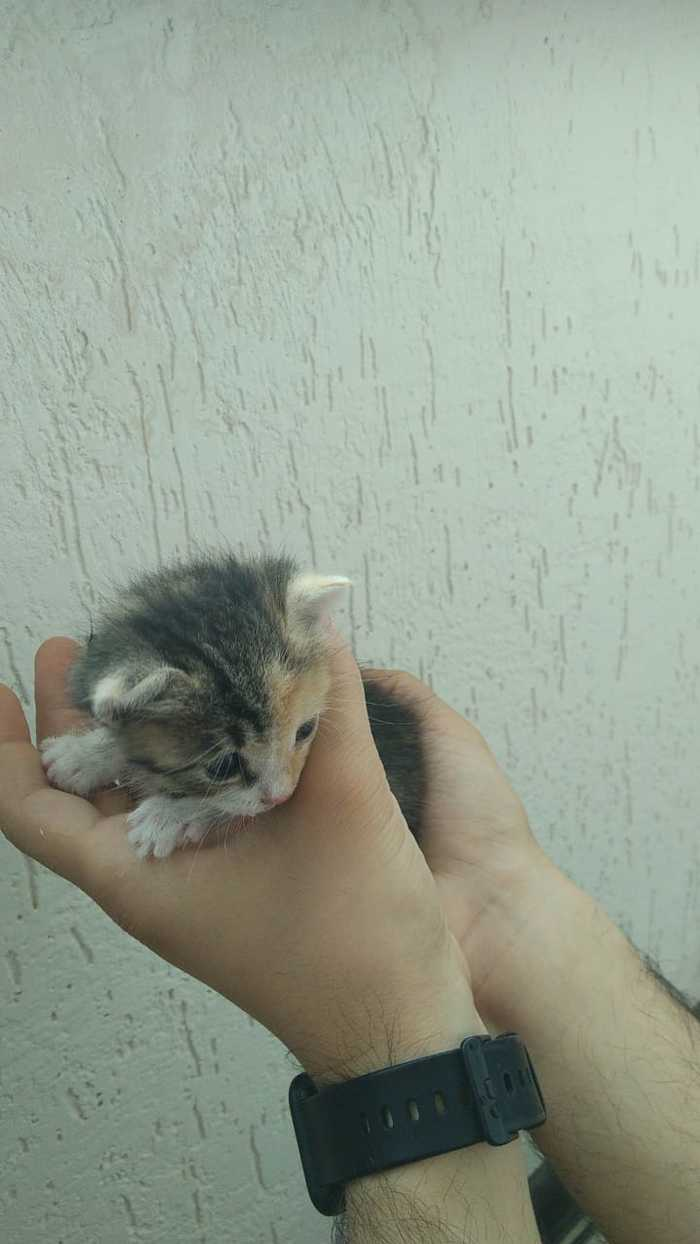 Котёнок в хорошие руки Кот, Без рейтинга, Длиннопост, Ищу дом, Помощь, Каспийск, Махачкала, Котята, В добрые руки