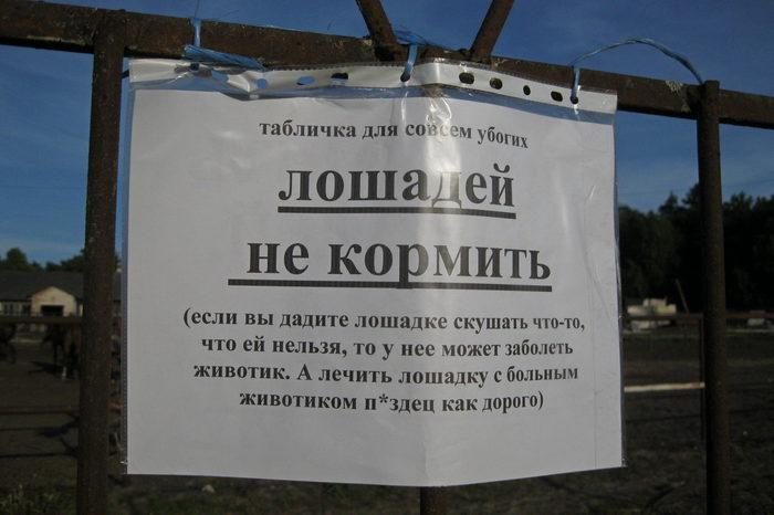 Лошадей не кормить Объявление, Лошадь, Фотография, Вконтакте