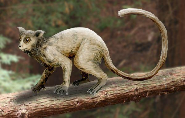 Necrolemur - лемур, похожий на долгопята Длиннопост, Интересное, Познавательно, Лемур, Палеонтология