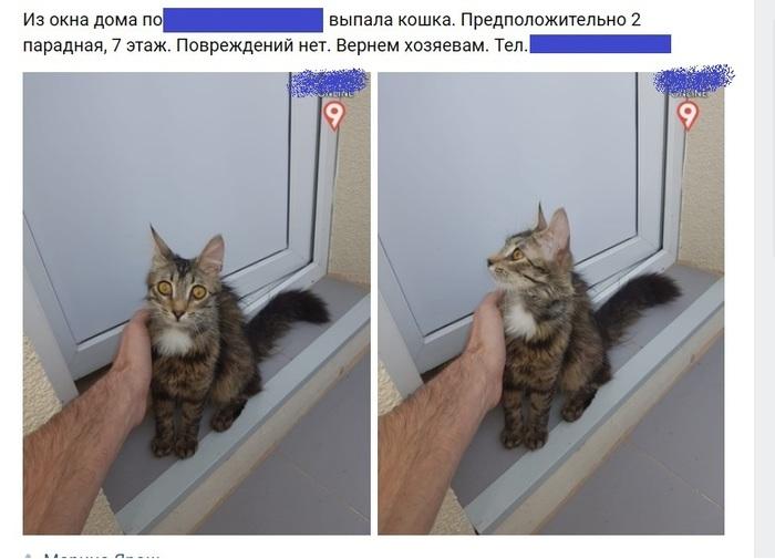 Она до сих пор летит Кот, ВКонтакте, Скриншот, Комментарии, Длиннопост