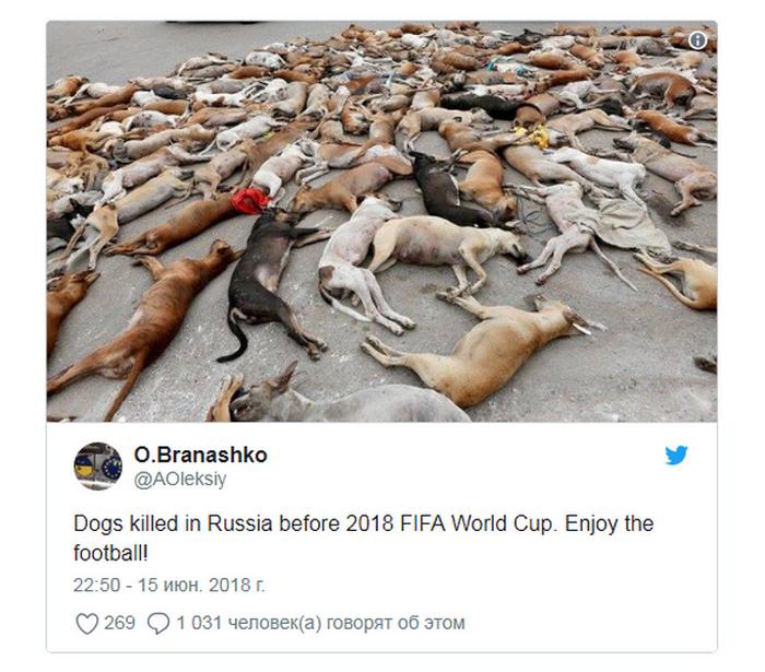 Немецкие СМИ разоблачили фотографию с убитыми перед ЧМ-2018 собаками Россия, Политика, чемпионат мира, Новости, Дезинформация, длиннопост