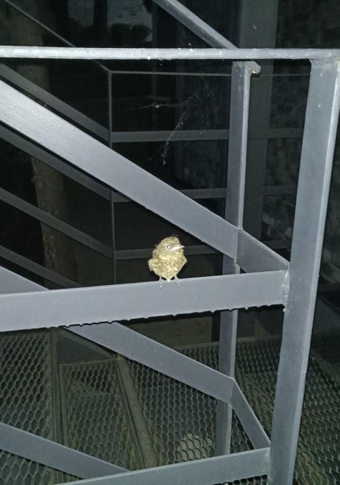 Ночной гость. Птенец, Фотография, Длиннопост