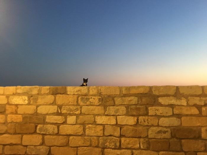 Кот и минимализм