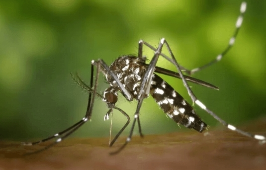 7 самых опасных насекомых в мире топ, самые опасные насекомые, длиннопост, Насекомые