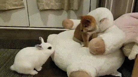 Кролик-рейдер