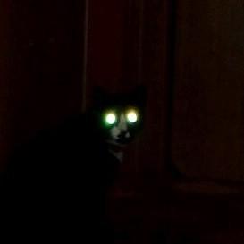 Встреча в ночи. Кот, Ночь, Глаза, Взгляд, Ночной дозор