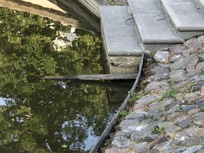 Лесенка для утят Утята, фотография, пруд, длиннопост