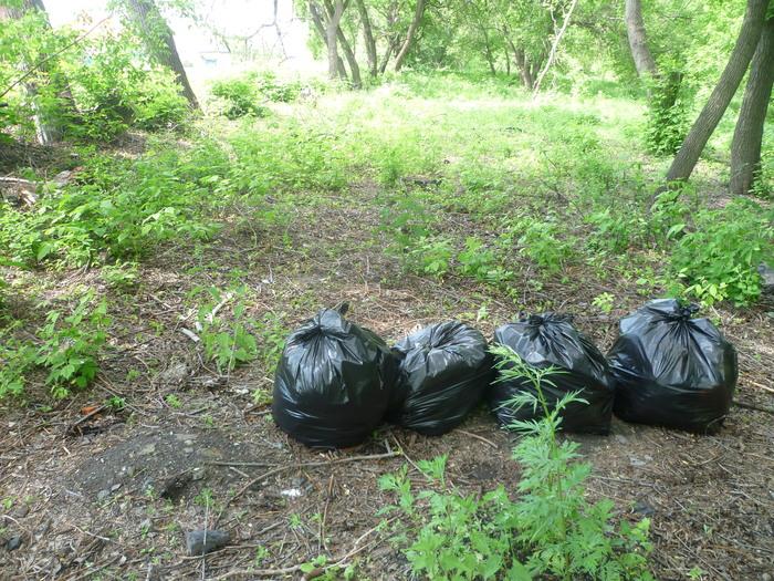 Минус 500 литров мусора в лесу. чистомен, субботник, уборка, длиннопост, чистый лес