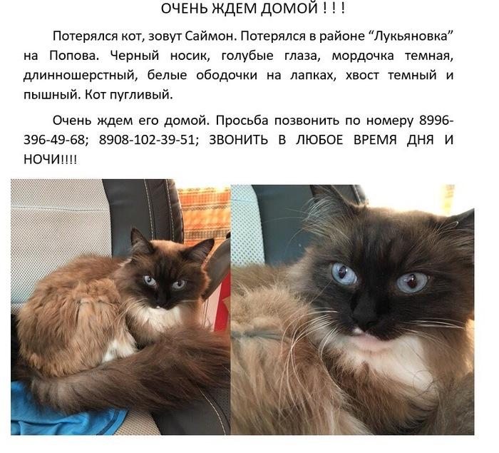 Омск, лукьяновка. Потерялся кот. Омск, Нефтяники, Кот, Помощь, Без рейтинга, Потерялся кот