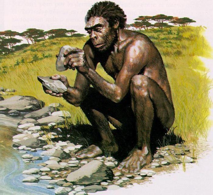 Пенисная кость приматы высшие
