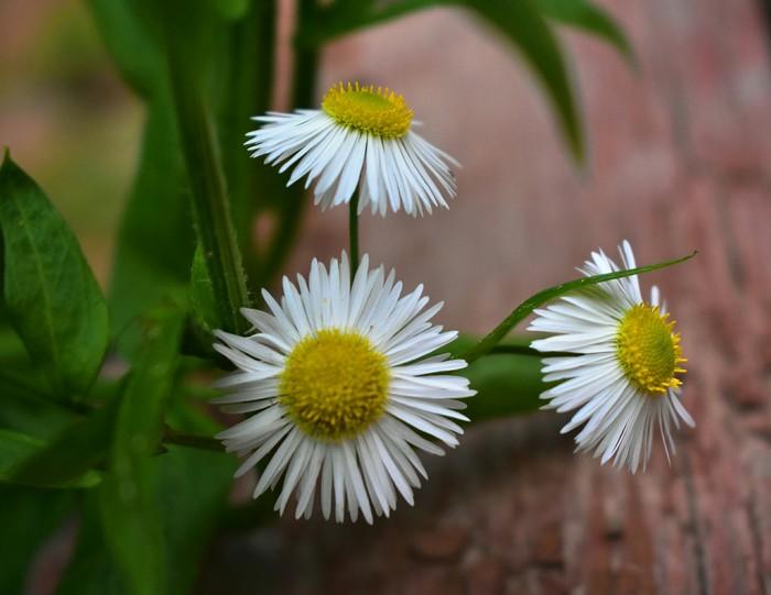 Цветы Цветы, Начинающий, Nikon d3400, Длиннопост