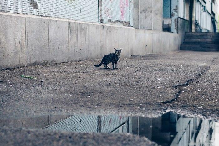 Варежка #5 Животные, Кот, Собака, Красноярск, Новоалтайск, Барнаул, Длиннопост, Фотография