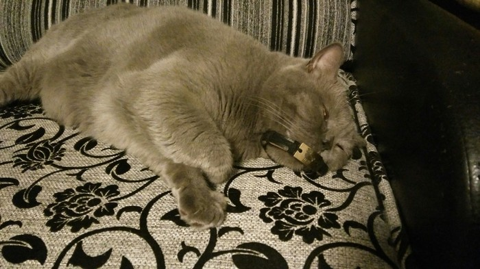 Кот спит.. Кот, Показалось, Серый, Длиннопост