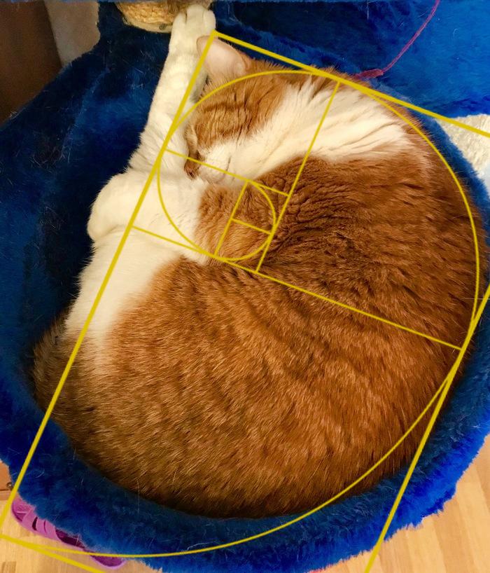 Доработал Кот, Золотое сечение