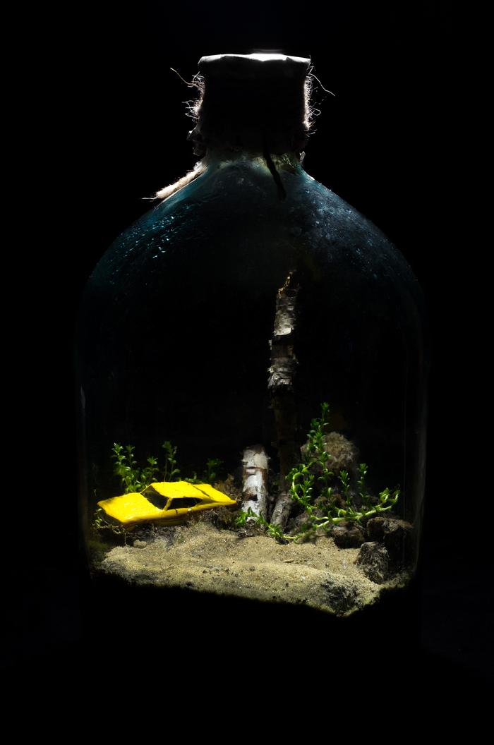 Замкнутая экосистема дома Своими руками, Растения, Экосистема, Длиннопост