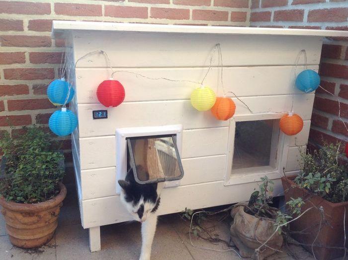 Как американец коту умный дом строил умный дом, кот, перевод, самоделки, длиннопост