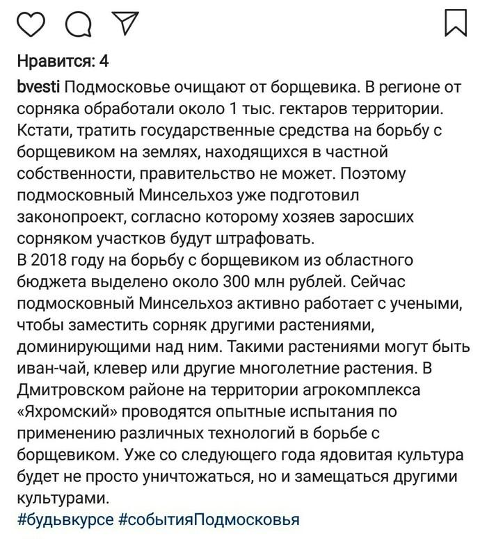 Борьба с борщевиком станет обязательной Подмосковье, Борщевик, Длиннопост