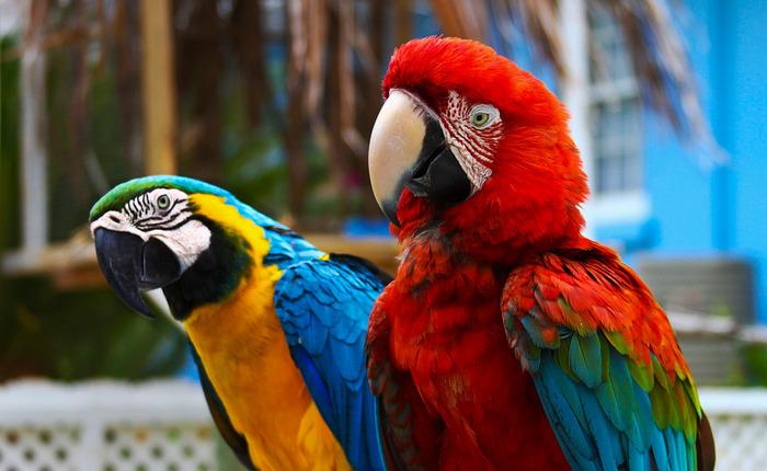 Узбекистан стал крупнейшим экспортером попугаев в Россию Узбекистан, Попугай, Россия, Экспорт, Новости
