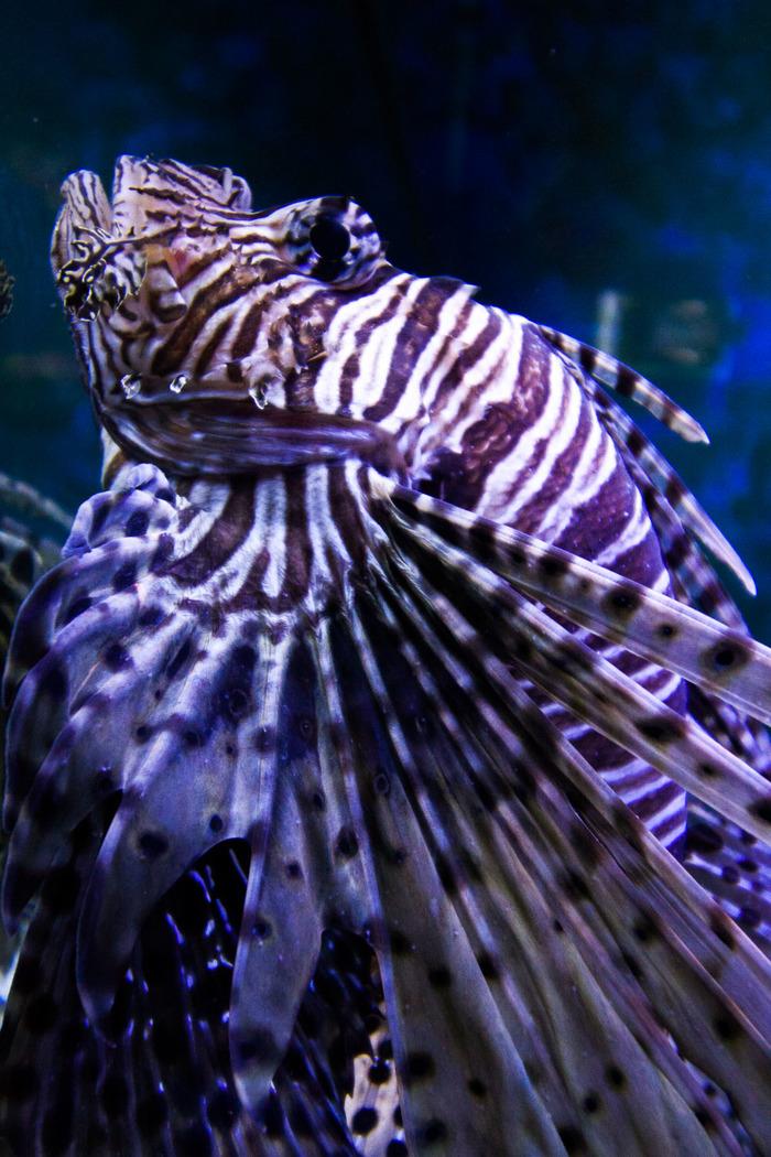 Подводный мир Аквариум, Рыба, Пиранья, Мурена, Океанариум, Подводный мир, Длиннопост