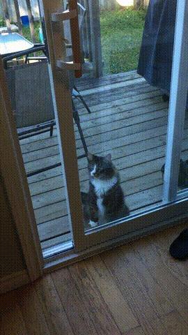 Эй, ребята, ну впустите же меня!
