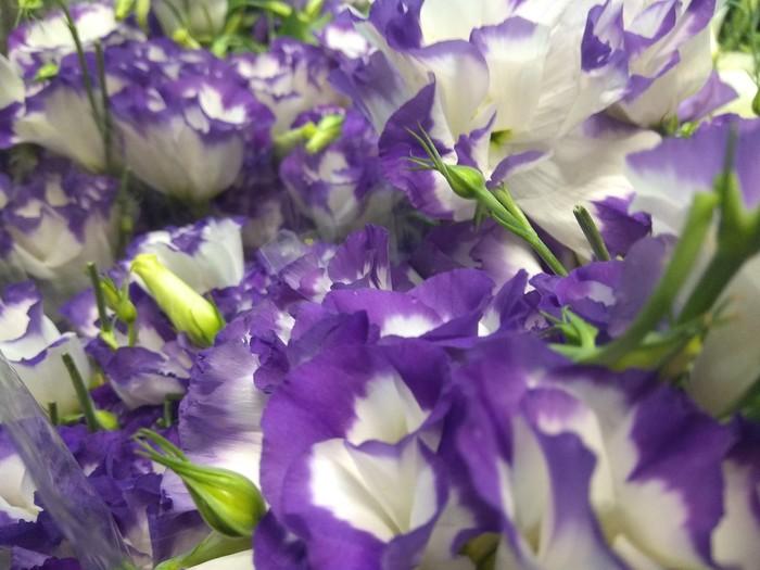 Немного красивых цветов из солнечной Армении. Цветы, Эустома, Красота, Длиннопост