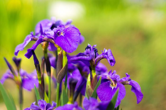 Ботанический сад Цветы, Ботанический сад, Лето, Длиннопост