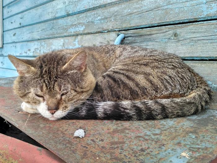Старый кот Старый, Кот