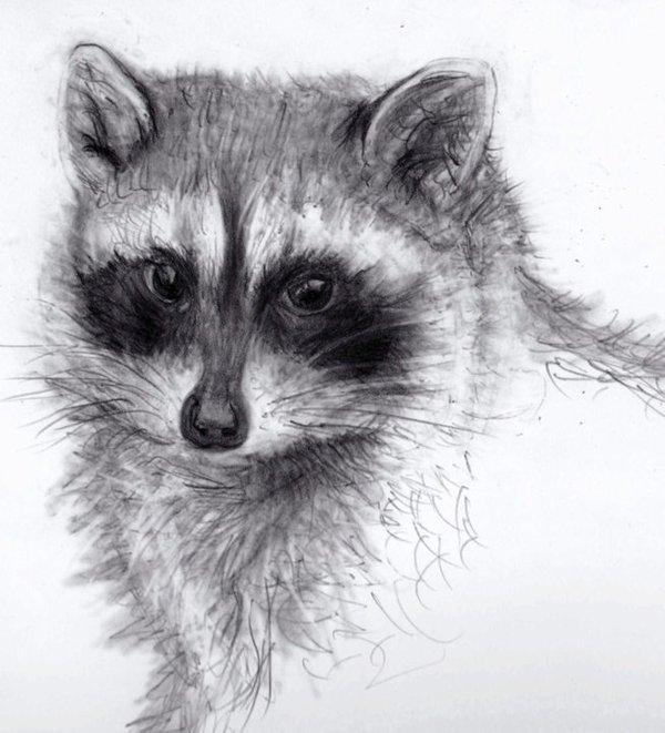 Несколько рисунков карандашом Рисунок карандашом, Животные, Длиннопост