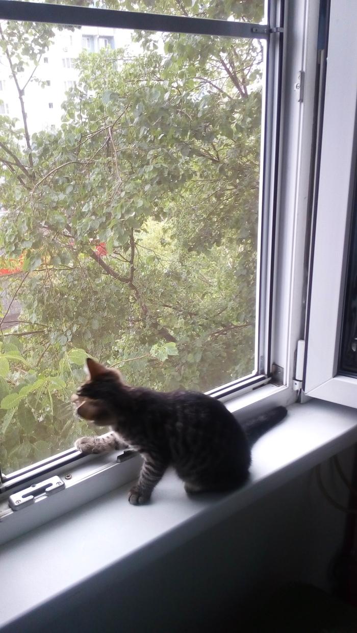 Слепой кот Хёд. Слепой кот Хёд, Длиннопост, Кот