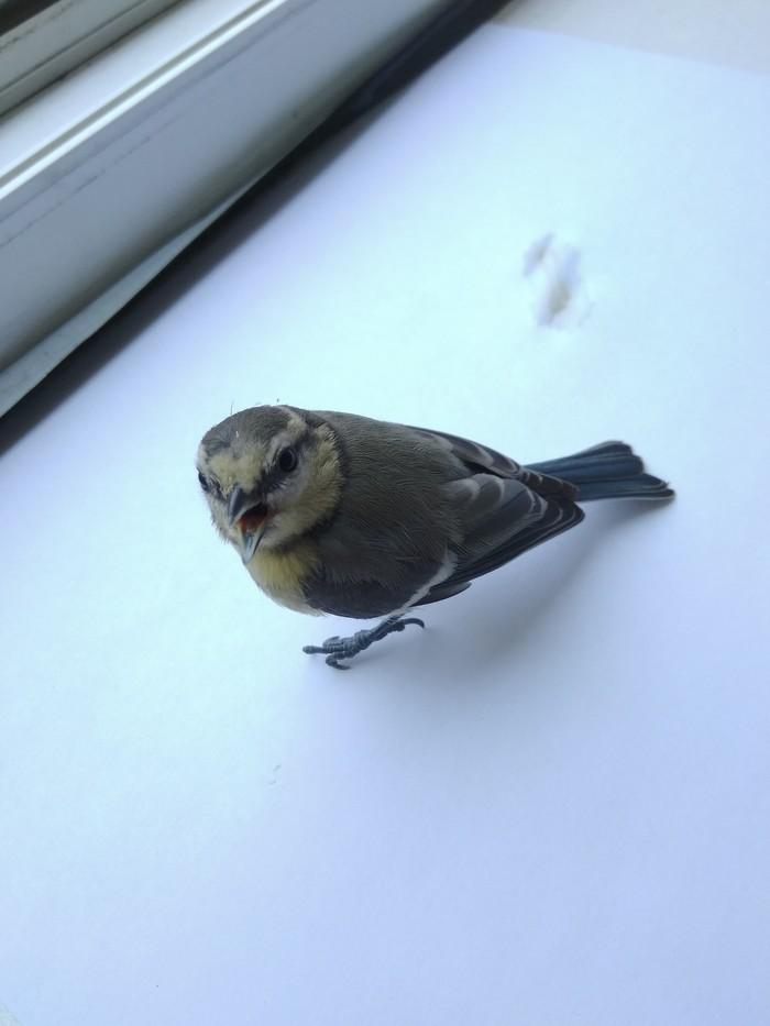 Прилетело Что за птица?, Длиннопост, Птенец, Слетки