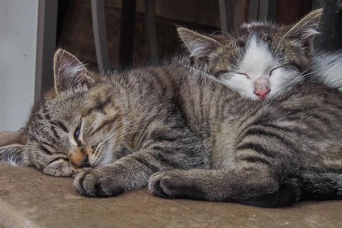 Твоё лицо, когда она любит спать в обнимку Котята, Милота, Моё, Спят, Сон, Кот