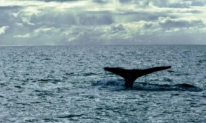 Кит Австралия, Океан, Кит, Фотография