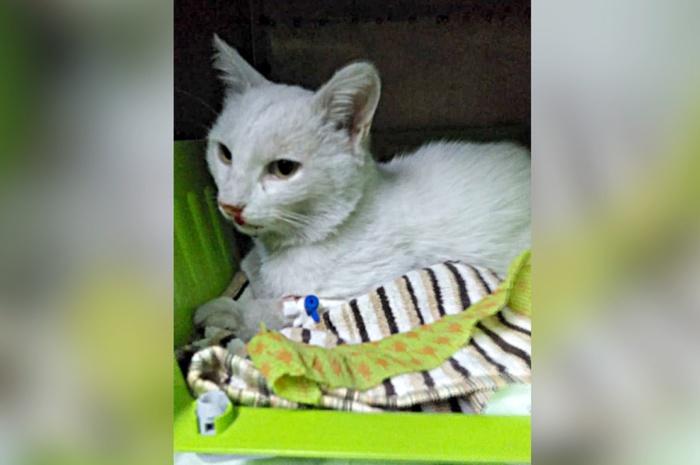 Полиция завела дело после смерти кота от пулевых ранений Кот, Ранение, Прокуратура, Новосибирск, Уголовное дело, Негатив