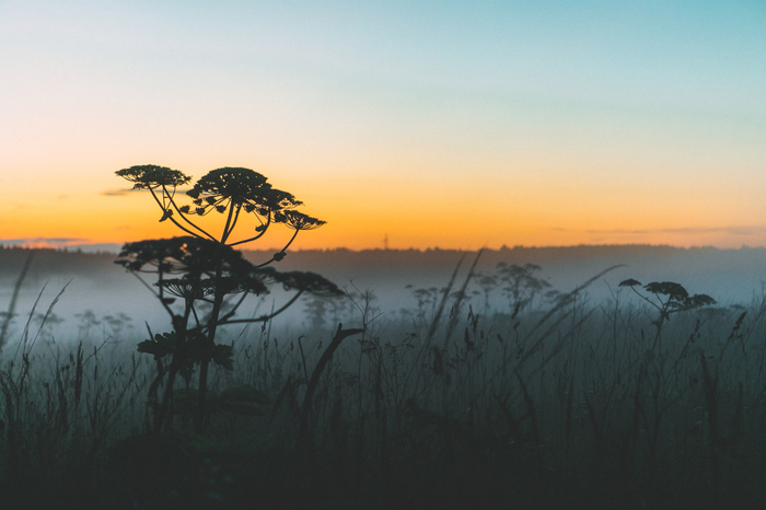 Туманы Борщевик, Туман
