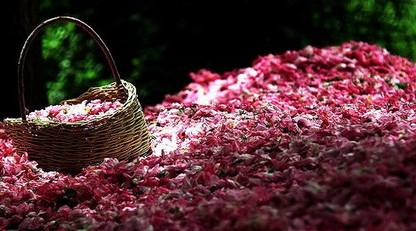 Голаб - розовая вода Парфюмерия, Духи, Роза, Розовая вода, Рецепт, Инструкция, Кулинария, Длиннопост
