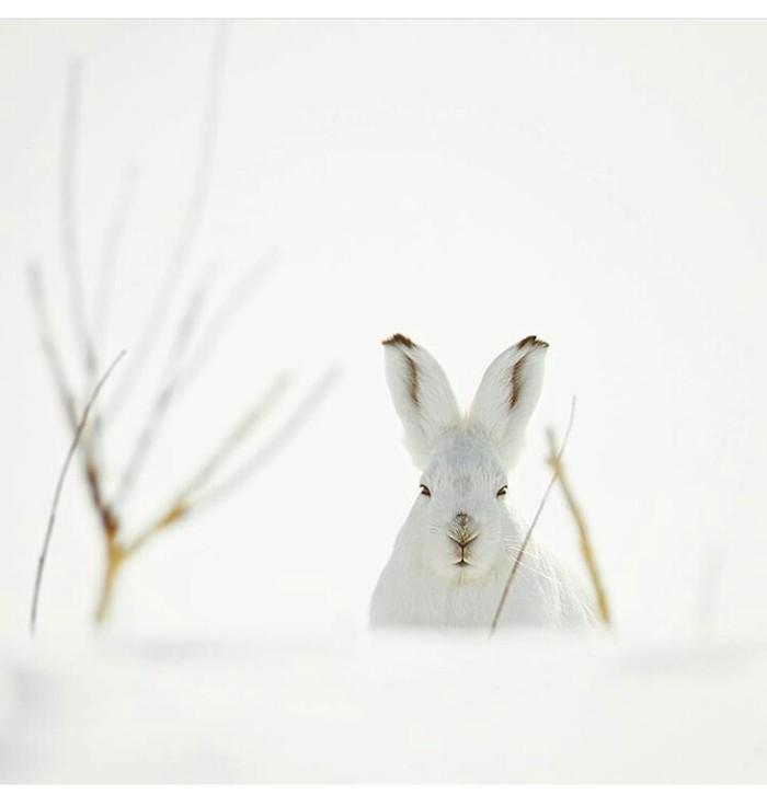 Заяц-подозреваяц