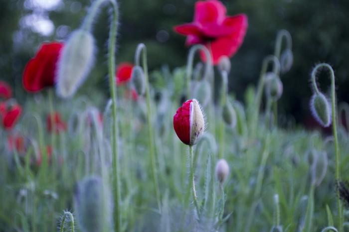 Красота вокруг нас часть 2 Фотография, Цветение, Природа, Длиннопост