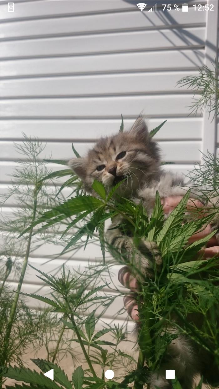 Понедельничный котик