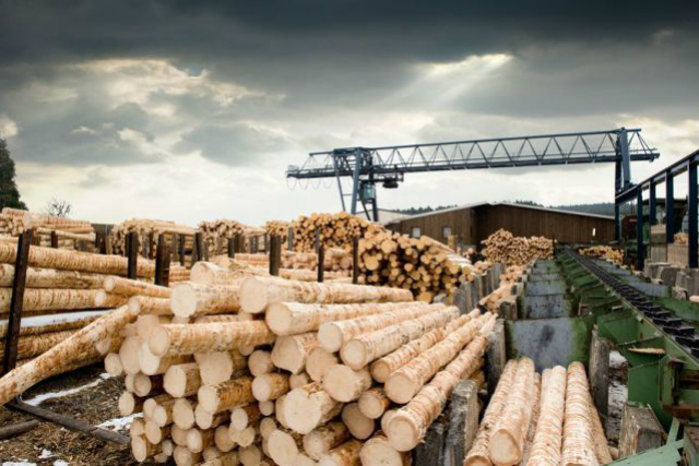 «Китайские инвесторы», работающие в Томской области, якобы хронически убыточны лес, китай, власть