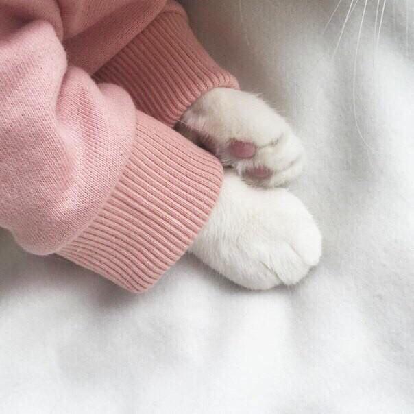 Сложно найти что-то более идеальное Лапки, Кошачьи подушечки, Идеально, Кот, Милота, Длиннопост