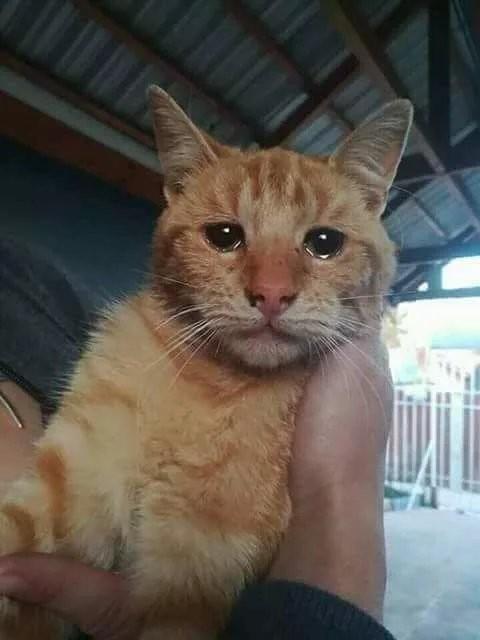 Я всего лишь рассказал этому коту про свою жизнь(((( Хнык-хнык