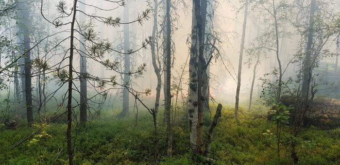 Красиво но страшно... Пожар, Тушение, Лес, Охрана природы, Длиннопост