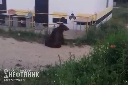 Медведь на Сахалине штурмует кухню на нефтепромысле Сахалин, Водка медведи балалайка, Бурые медведи, Природа и человек, Видео