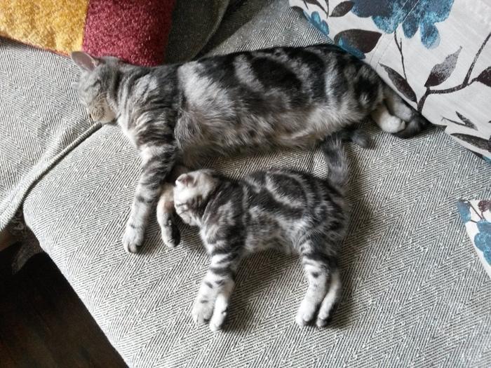 Весь смысл жизни кошек