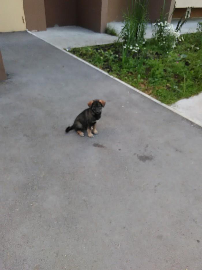 Сонечка ищет дом. Пермь, Собака, Бездомные животные, Помощь, Любовь, Длиннопост, Сила пикабу