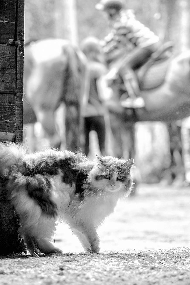 Крысолов Кот, Конюшня, Моё