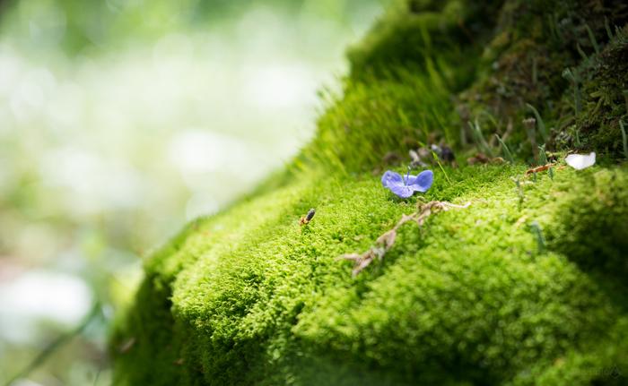 Рандомная подборка. Тучи, облака, зелень Nikon d5200, Пейзаж, Облака, Фотография, Мох, Травы, Длиннопост