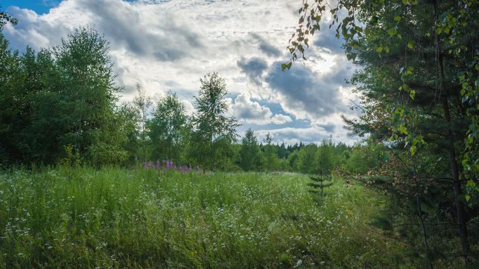 Рандомная подборка. Тучи, облака, зелень Nikon d5200, Пейзаж, Облака, Фотография, Мох, Трава, Длиннопост